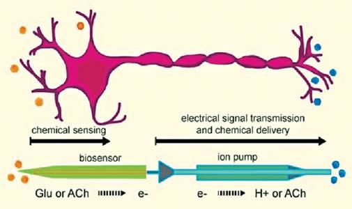 Создан искусственный нейрон